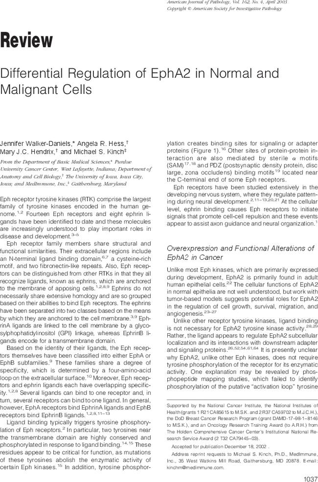 Differential Regulation of EphA2 in Normal and Malignant Cells - The ...