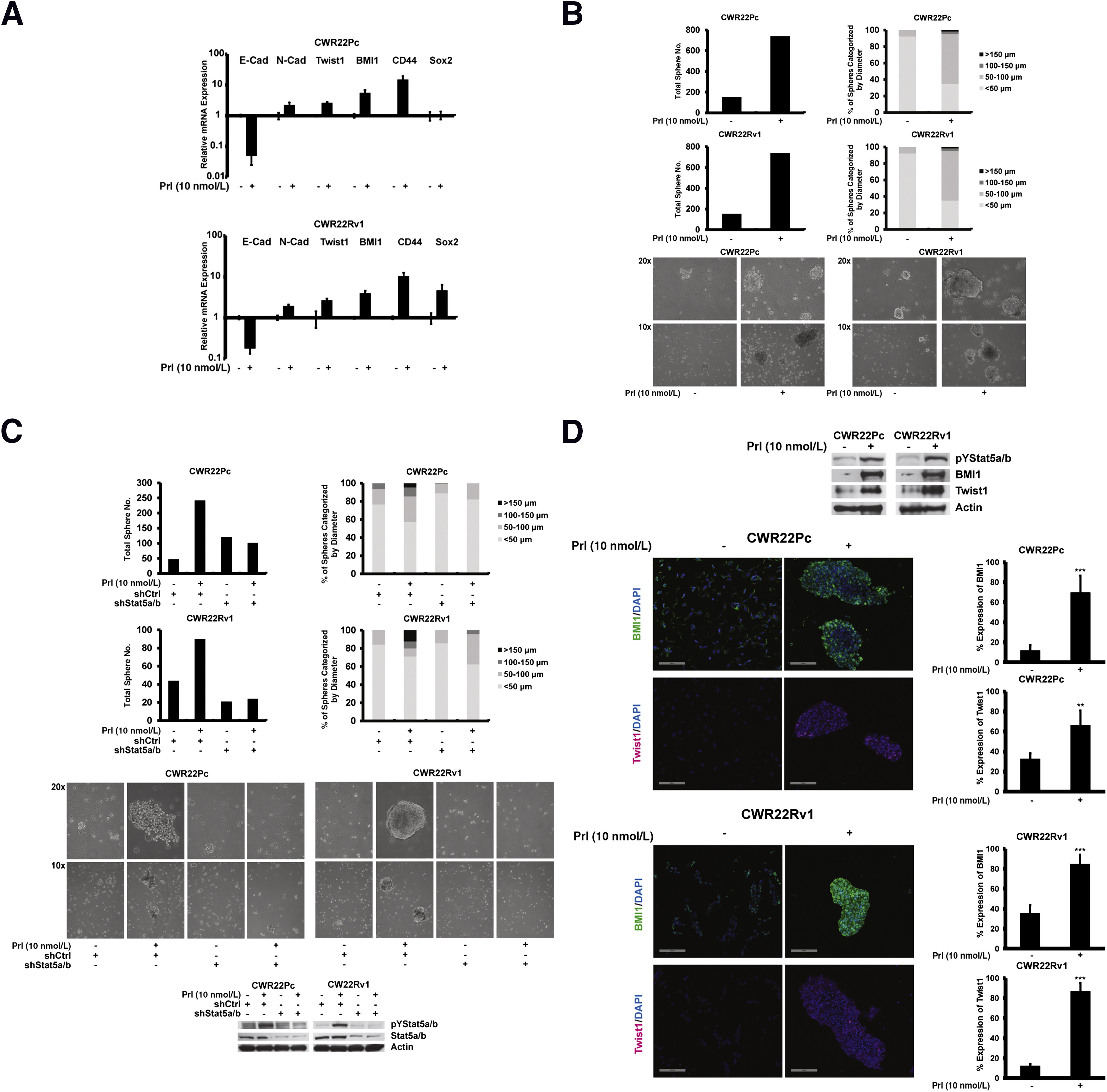 Jak2-Stat5a/b Signaling Induces Epithelial-to-Mesenchymal Transition ...