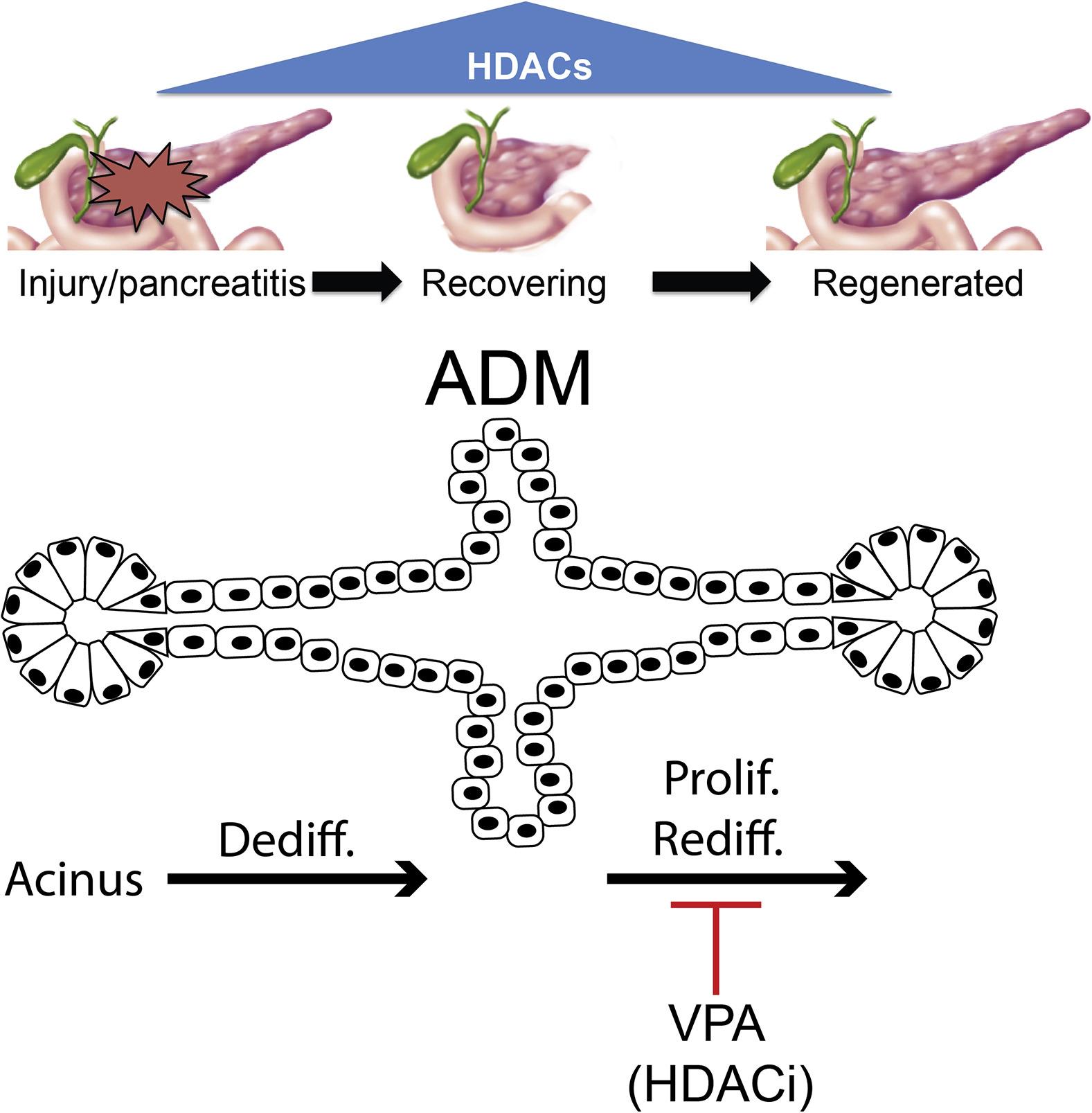DNA Methylation, Stem Cells and Cancer | IntechOpen