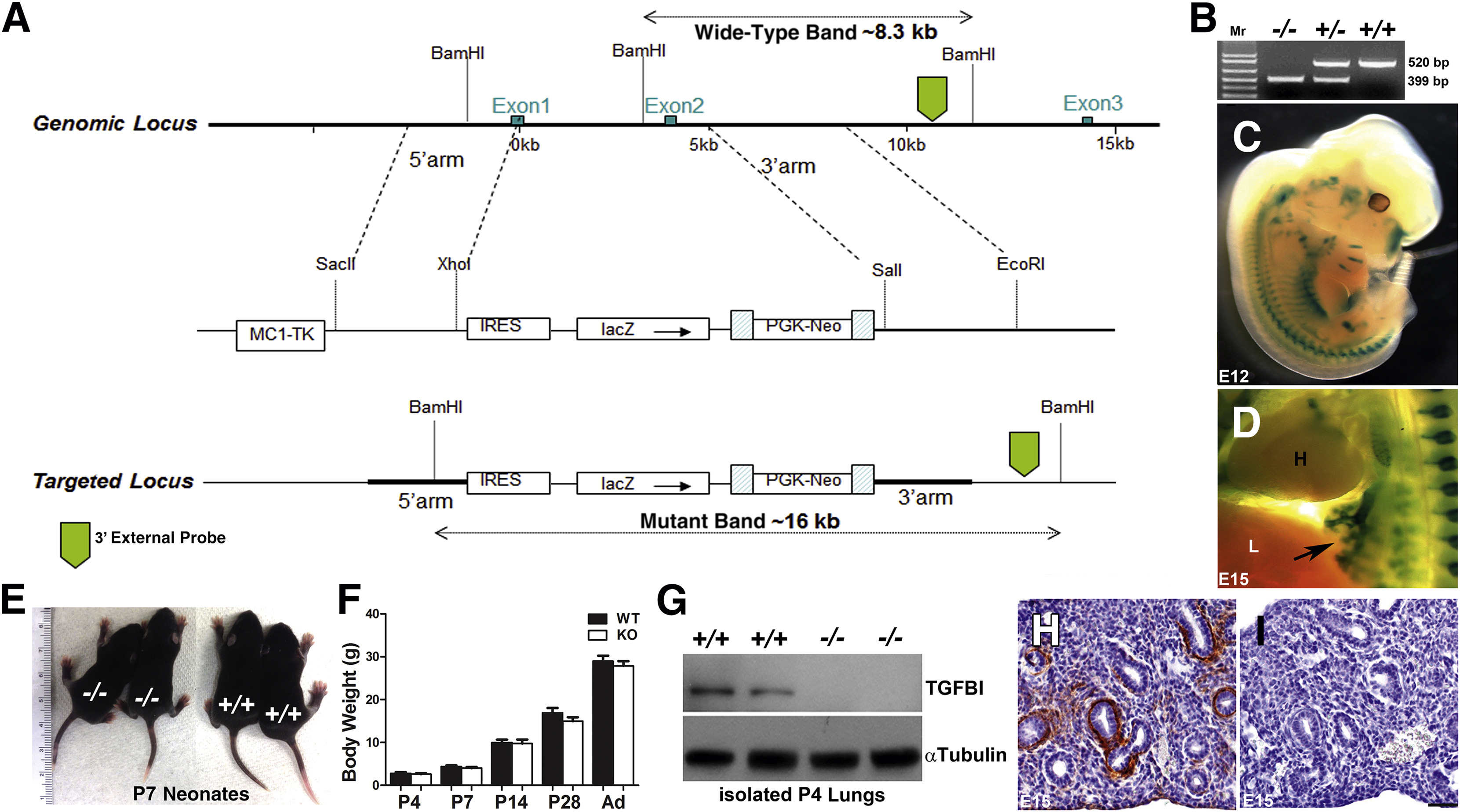 Initial Suppression of Transforming Growth Factor-β Signaling and ...