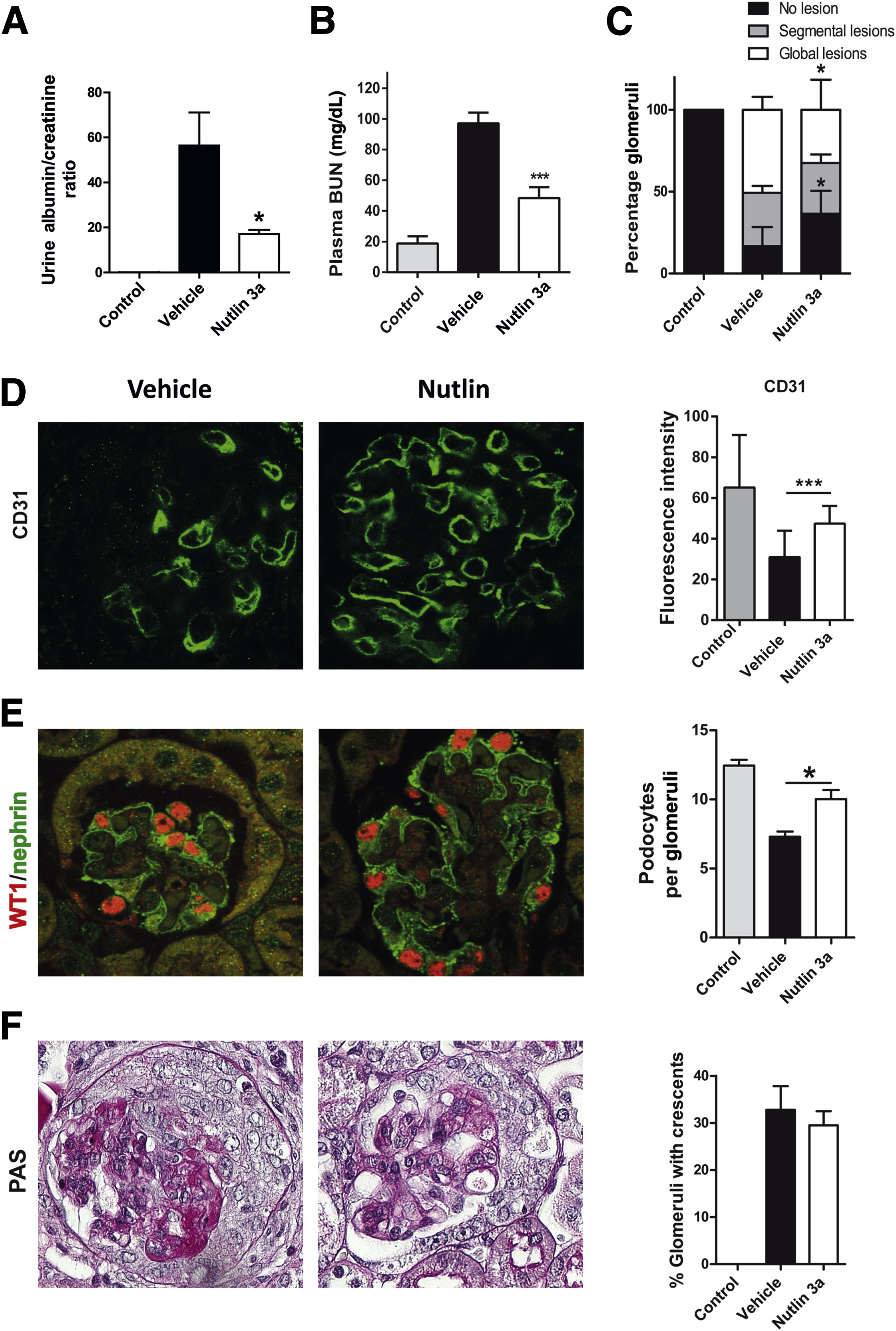 essay map examples definition