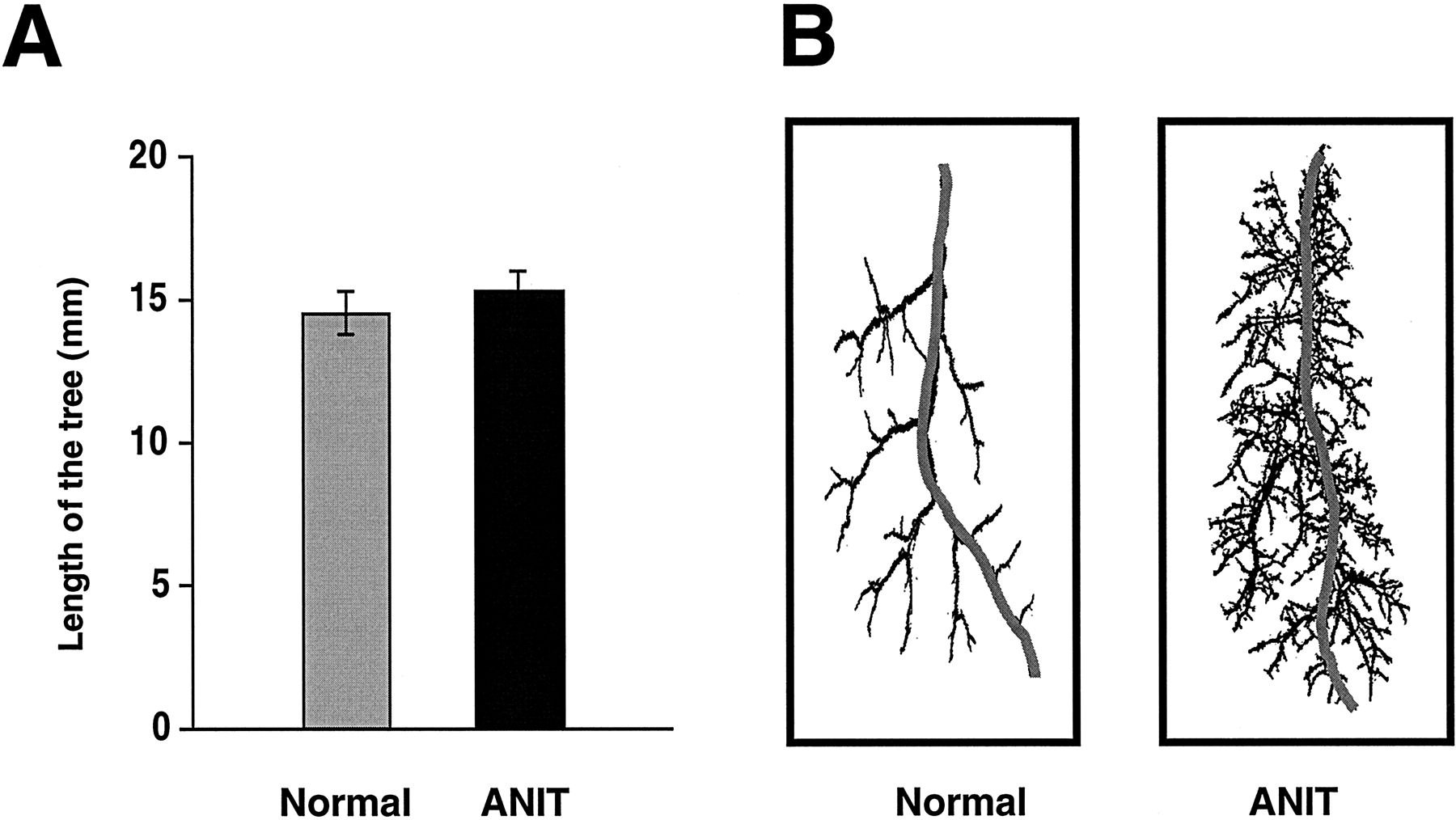 Quantitative Assessment of the Rat Intrahepatic Biliary System by ...